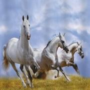 Штора для ванной комнаты 02-11 BRIMIX Тройка лошадей